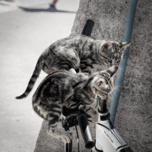 cats exploring